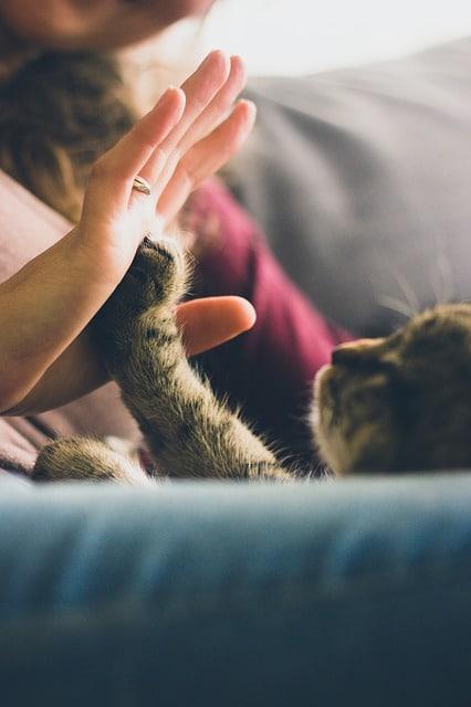 chat main dans la patte