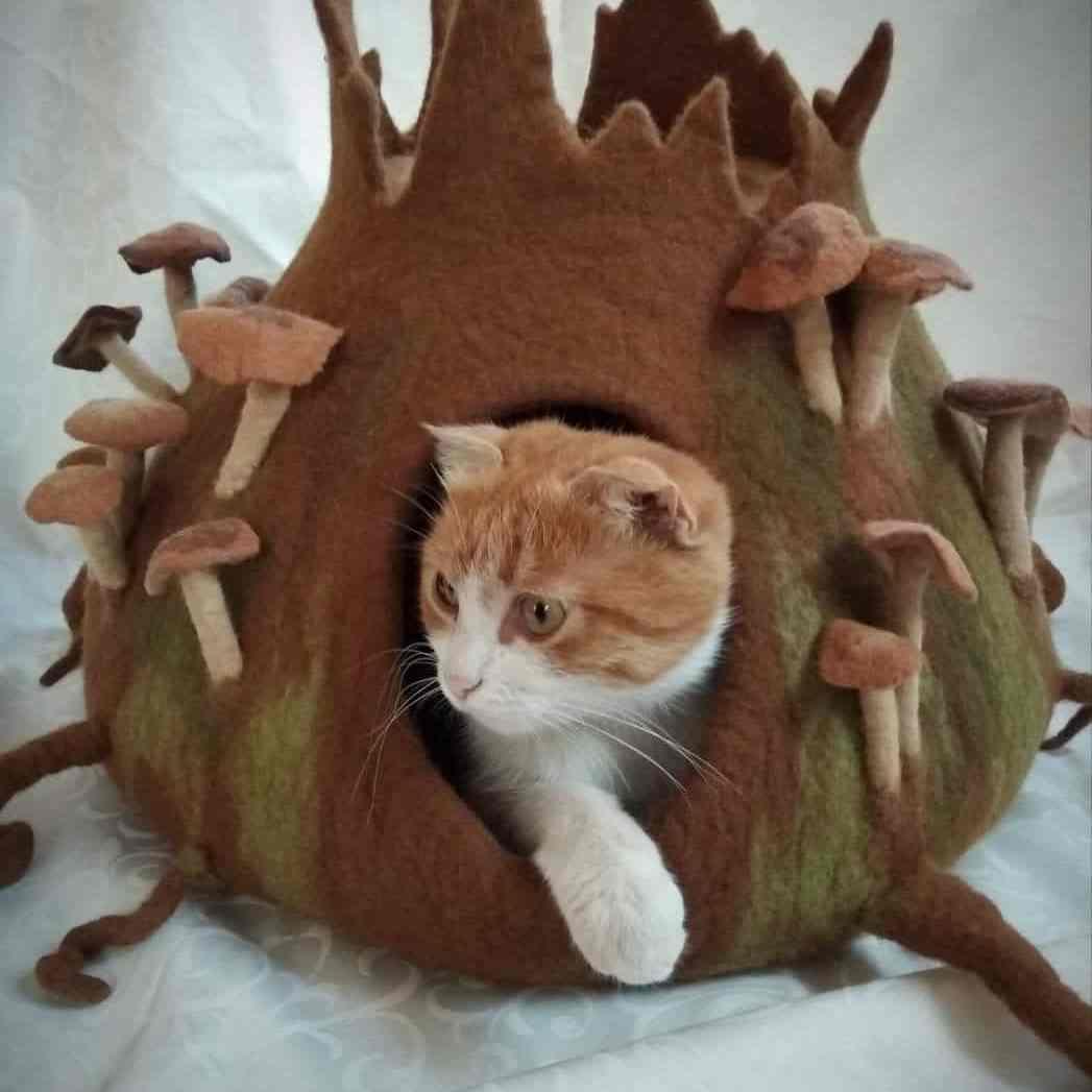 grotte chat relief champignon