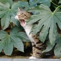 Répulsif pour chasser le chat hors du jardin (ou s'en faire un ami pour toujours)
