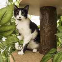 L'arbre à chat original : graphisme, géométrie et allure insolite