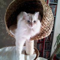 Arbre à chat en matière végétale : osier, jacinthe, rotin, banana leaf... et le mien