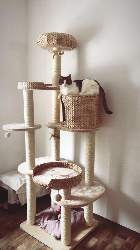 arbre à chat jacinthe 6 niveaux niche