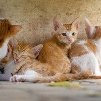 Assurer son chat contre les maladies courantes