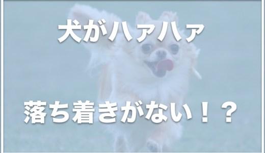 犬がハァハァと落ち着きがないのはなぜ?息が荒い・様子がおかしい 場合は注意!