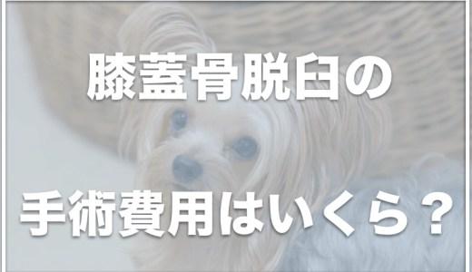 パテラ手術後の過ごし方!犬のパテラマッサージのやり方は?手術しない選択もあるの?