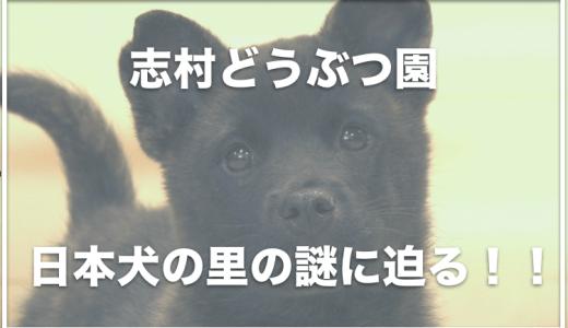 志村どうぶつ園の日本犬の里では死亡事故が起きていた!?終了した理由は何?