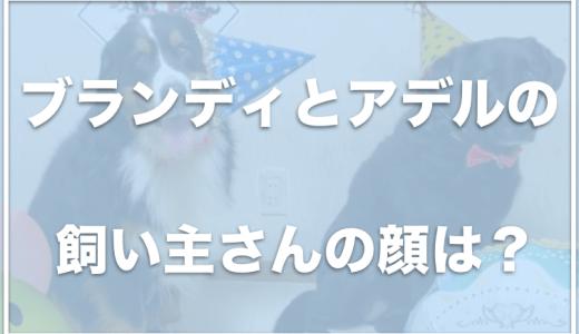 ブランディ・アデルの犬種は何?元保護犬なの?飼い主の顔や職業も調査!