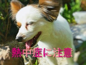 犬の熱中症を予防するためのグッズ紹介!お留守番の時の室内の温度や飲み物の工夫の仕方!