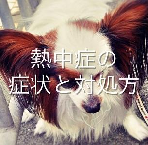 犬の熱中症は命の危機!症状と対処法を知って、いざという時の準備を万全に