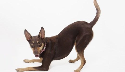 世界の犬の寿命ランキング!長生きのコツと秘訣は散歩と睡眠?!