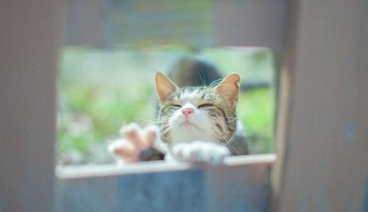 猫ブームが熱い!「ねこ検定」にはどんな問題が出るの?!