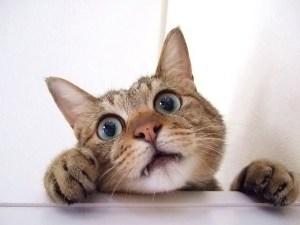 子猫が目を見開いている