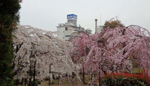 吹田市でしだれ桜を見れる場所はここ!超穴場、アサヒビールの迎賓館「先人の碑」で一般公開!