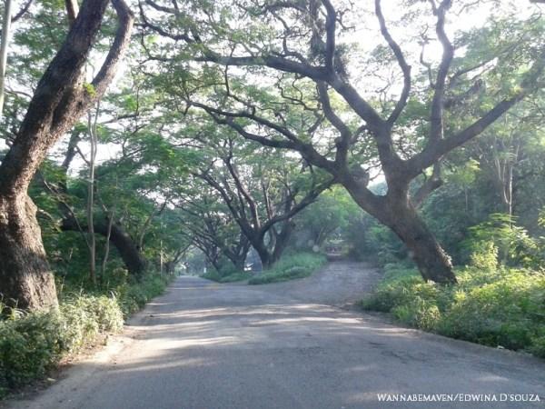 Roads in Aarey Milk Colony