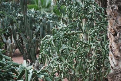nog een cactus, iemand?