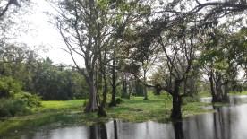 An oasis in Vavuniya