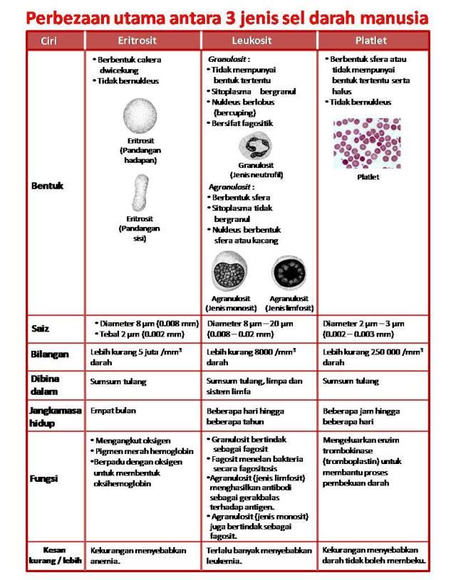 Jenis Darah Dan Fungsinya : jenis, darah, fungsinya, Perbezaan, Utama, Antara, Jenis, Darah, Manusia, Wannura, Anatomi