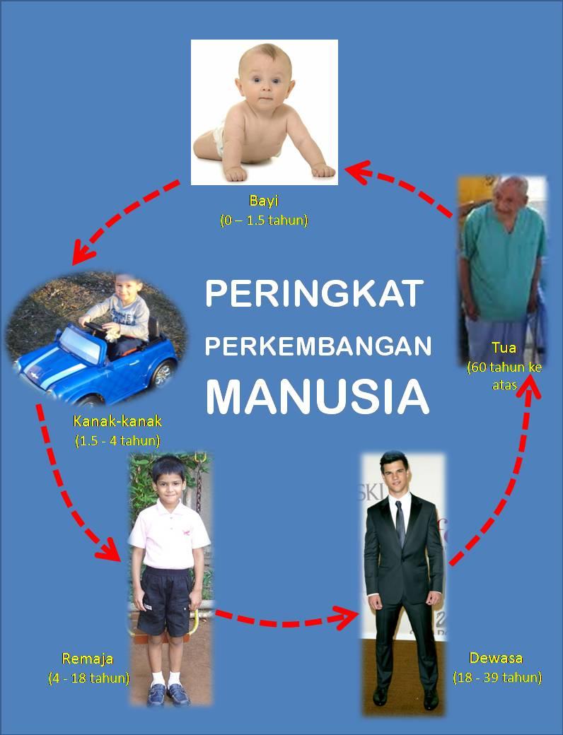Gambar Tahap Perkembangan Manusia : gambar, tahap, perkembangan, manusia, PERINGKAT, PERKEMBANGAN, MANUSIA, Wannura, Terapi