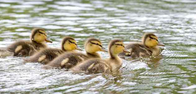 Five little guys