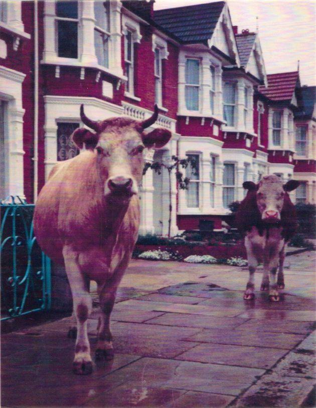 Dover Road, Aldersbrook. Photo Roger Godbold