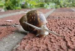 A snail hunt is great fun.