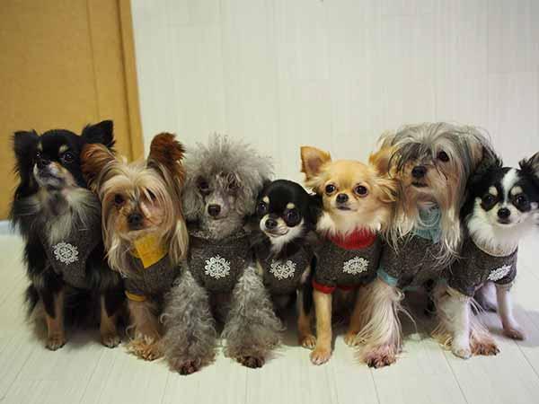 犬の服選びの注意点