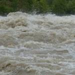 興津川の水位ライブカメラ映像!現在氾濫の危険や状況を確認!
