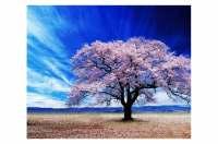 Cherry Blossom Tree Wall Art: Buy Wall Art Online on Wao ...