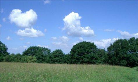View across Upper Meadow