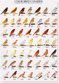 Colour Bred Canaries Poster #1