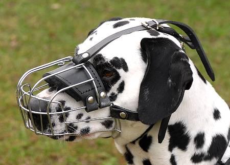 Dog Muzzle Wire Mesh