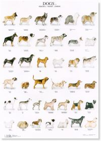 Dogs Poster #2