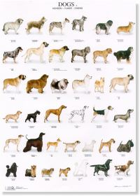 Dogs Poster #3