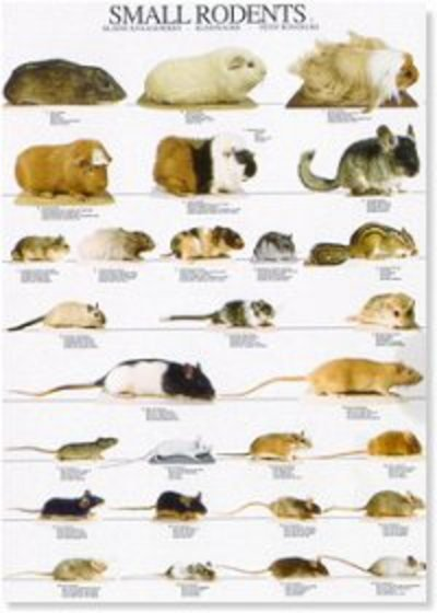 Rodents Poster #1