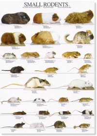 Rodents Poster #2