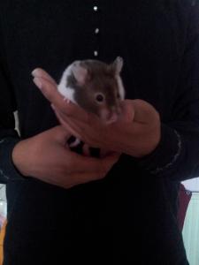 Hammy - Pet Sitting
