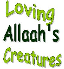 Allah's creatures