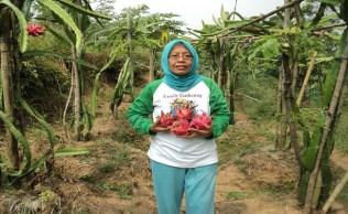 Super Red Waras Farm