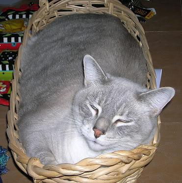 gryff-basket2