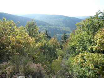 Visiting Battlefields: The Huertgen Forest and the Siegfried Line Homefront Wargame Center