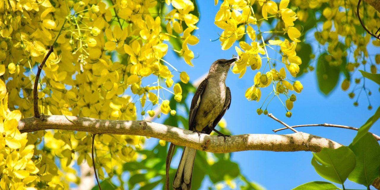 To Kill a Mockingbird, Part 1
