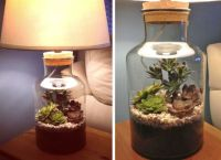 Terrarium Lighting For Plants