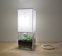 Terrarium lamp - a beautiful and unique way to bring ...