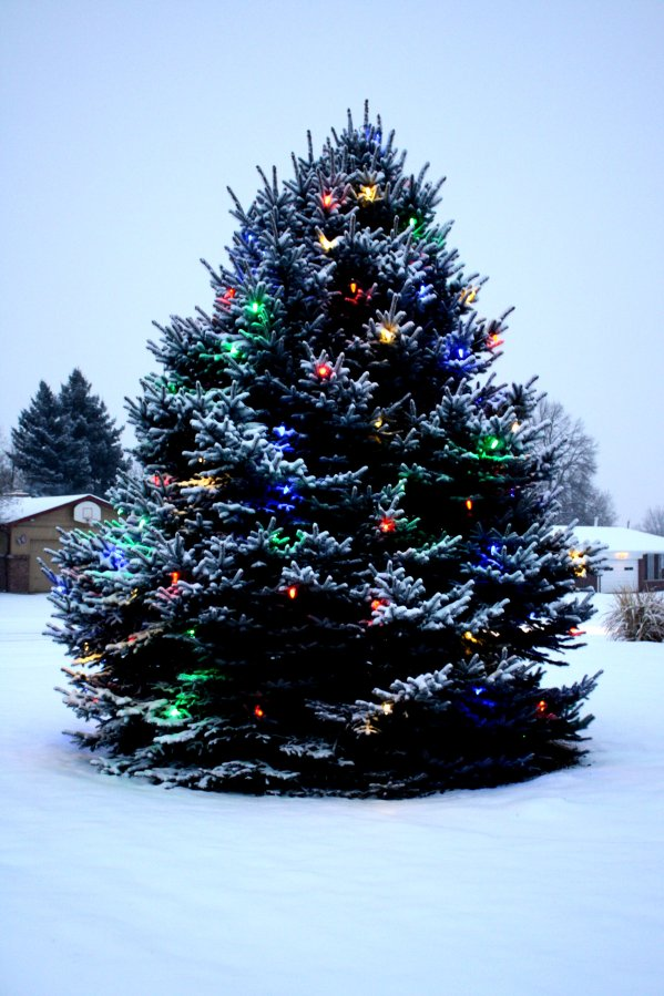 Christmas Tree Lights Outdoor