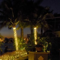 10 things you should know about Palm tree outdoor lights ...