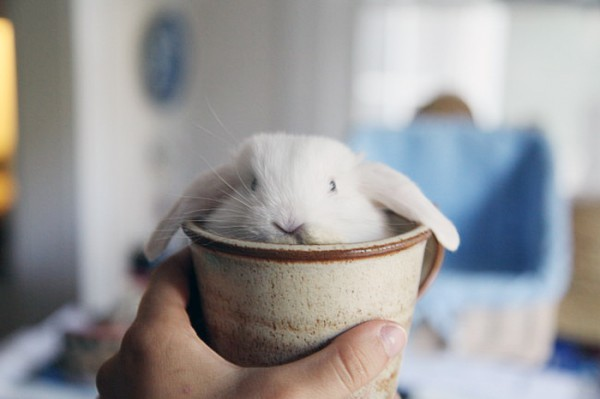 03_animal-In-Cup