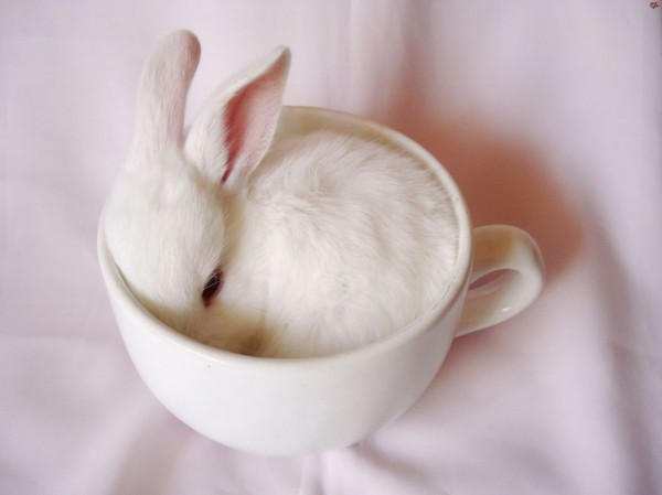 08_animal-In-Cup