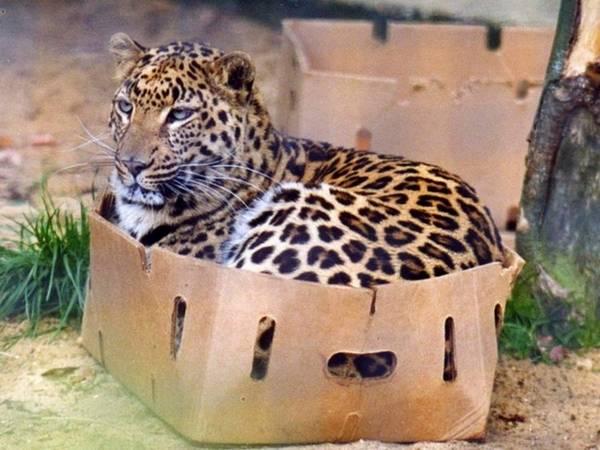 animalinthebox01