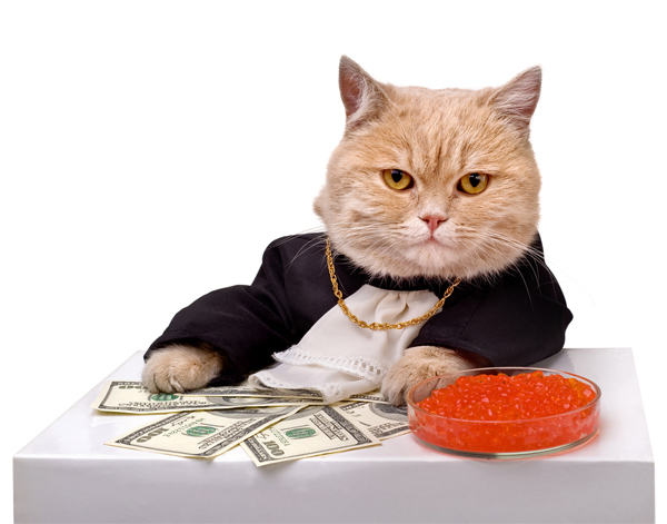 tell-fact-cat-rich