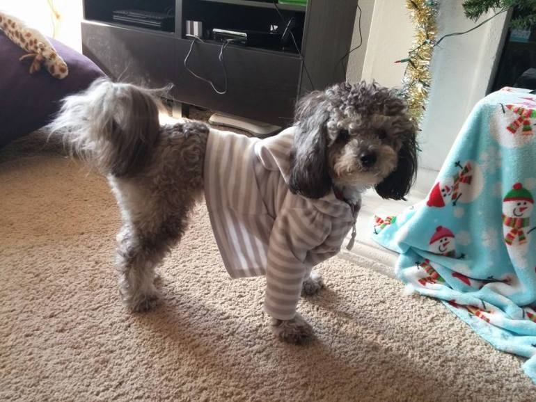 """This is my dog wearing my nieces sweater. I think he looks fabulous. He thinks he looks fabulous. He also agrees with my social media stance. He's also an advocated for """"Give Peanut Butter To A Brother"""" a puppy club designed to treat more dogs with peanut butter. Another stance I can agree with."""